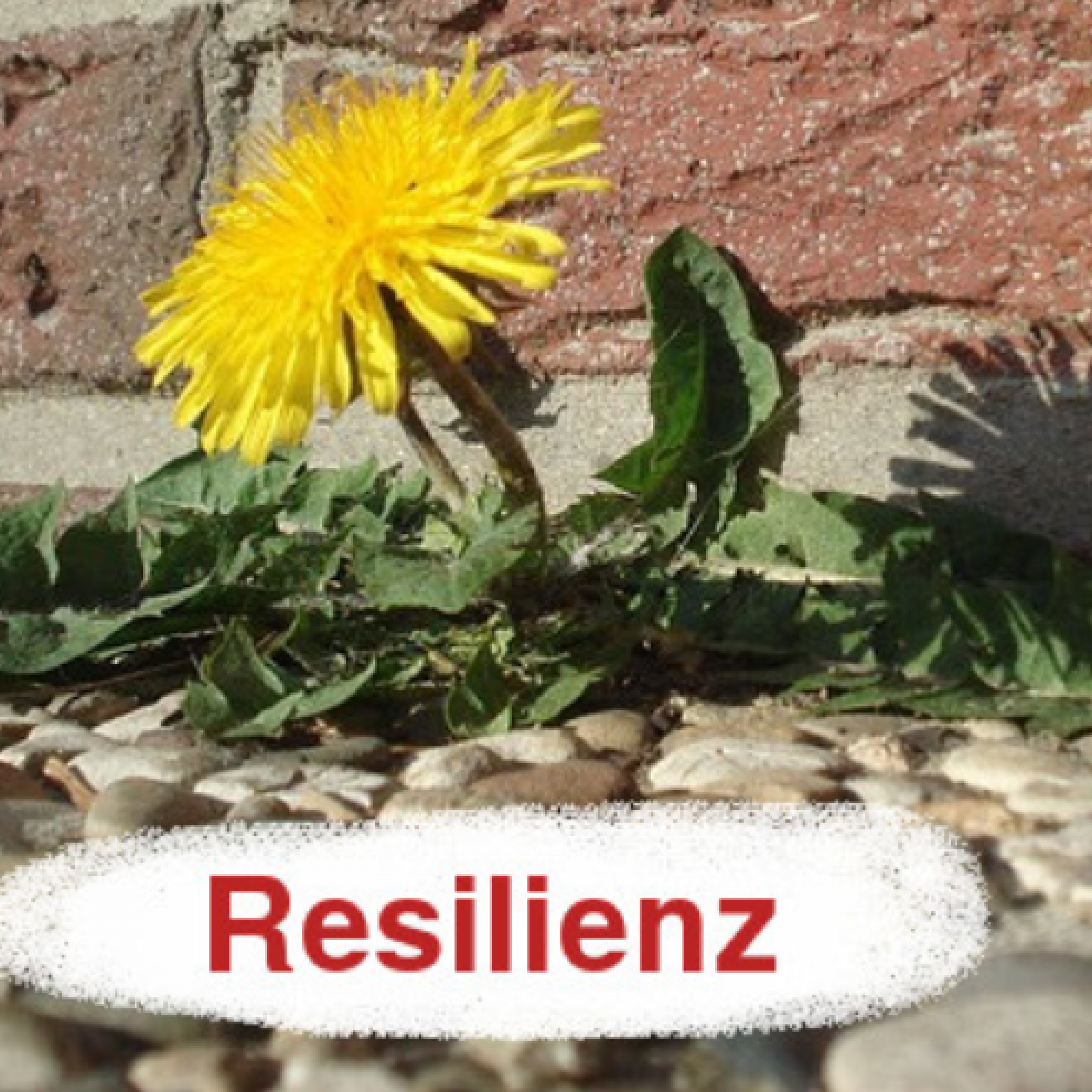 Resilienz_LöwenZahn